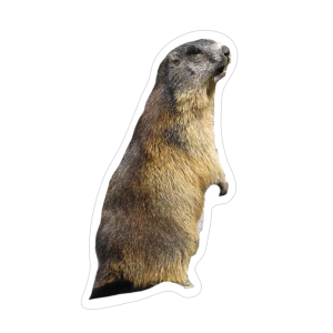 un immagine di Marmotta